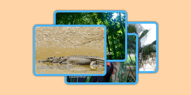 Australian Tropical Rainforest Habitat Photo Display Pack - australia, Science, Habitats, Australian Curriculum, Tropical, Rainforest, Living, Living Adventure, Good to Grow, Ready Set Grow, Life on Earth, Environment, Living Things, Animals, Plants,