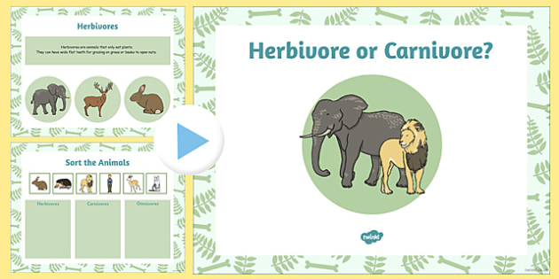 Living Things and their Habitat Herbivore or Carnivore Flipchart