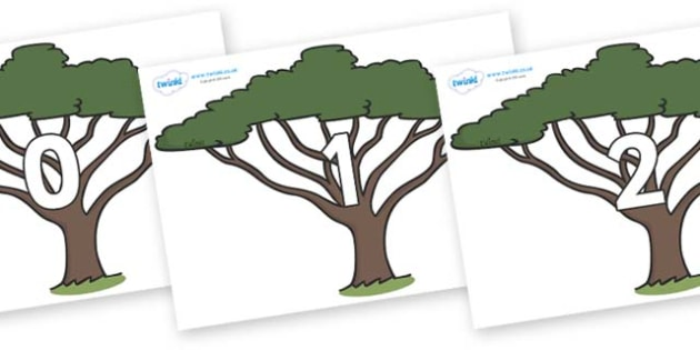 Numbers 0-31 on Acacia Trees - 0-31, foundation stage numeracy, Number recognition, Number flashcards, counting, number frieze, Display numbers, number posters