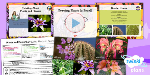 PlanIt - Art UKS2 - Plants and Flowers Lesson 1: Drawing Plants in Pencil Lesson Pack