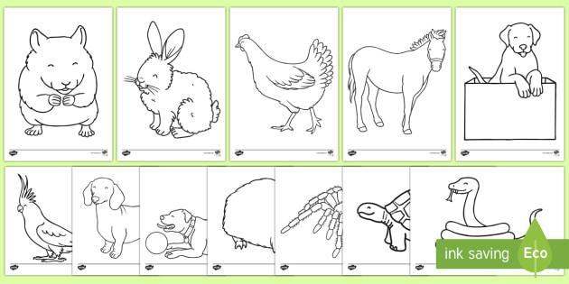 Pets Colouring Sheets - Pets, pet, xmas, colouring, fine motor skills, poster, worksheet, cat, dog, rabbit, mouse, guinea pig, rat, hamster, gerbil, horse, puppy, kitten, snake, chinchilla, snail, lizard, budgie