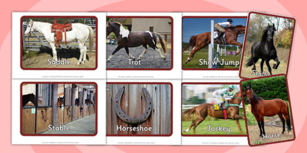 Horses and Ponies Display Photos - horses, ponies, display photos