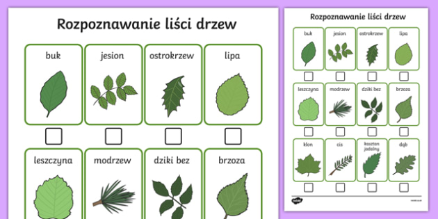 Tree Identification Sheet Polish