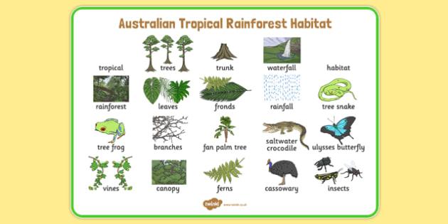 Australian Tropical Rainforest Habitat Word Mat - australia, Science, Year 1, Habitats, Australian Curriculum, Tropical, Rainforest, Living, Living Adventure, Good to Grow, Ready Set Grow, Life on Earth, Environment, Living Things, Animals, Plants, W