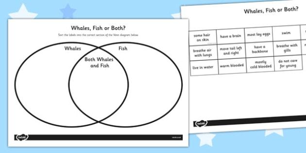 Whales and Fish Venn Diagram Activity Sheet - venn diagram, worksheet