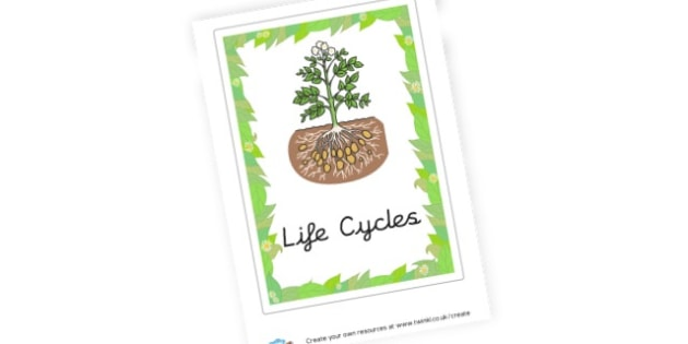 Life Cycles Topic Book Cover - Life Cycles Primary Resources, lifecyles, caterpillar, butterfly
