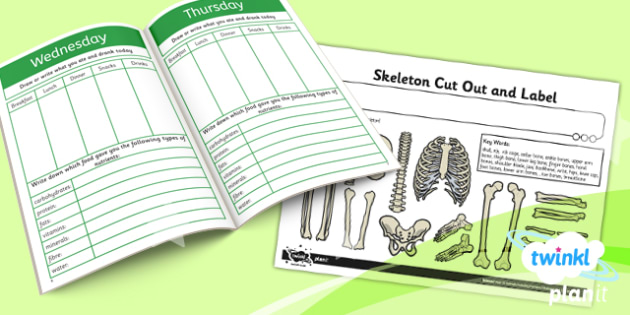 PlanIt - Science Year 3 - Animals Including Humans Unit Home Learning Tasks