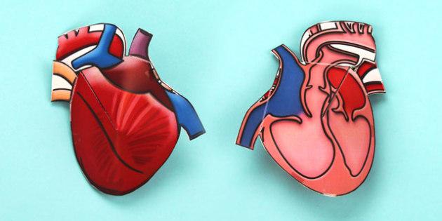 3D Heart Cross Section Activity - 3d, heart, cross section, model