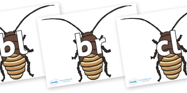 Initial Letter Blends on Cockroach - Initial Letters, initial letter, letter blend, letter blends, consonant, consonants, digraph, trigraph, literacy, alphabet, letters, foundation stage literacy