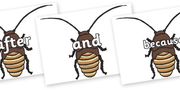 Connectives on Cockroach - Connectives, VCOP, connective resources, connectives display words, connective displays