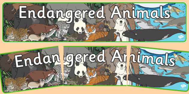 Endangered Animals Display Banner - endangered animals, animals, in danger, display, banner, sign, poster, tiger, elephant