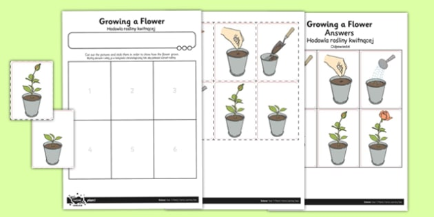 Activity Sheet Growing a Flower Polish Translation - polish, activity sheet, growing, flower, worksheet