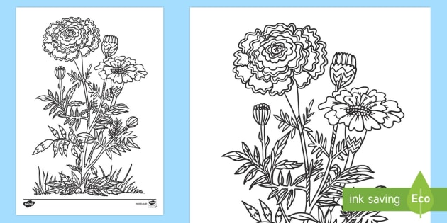 Day of the Dead Marigold Mindfulness Colouring Activity