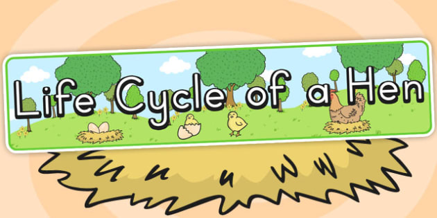 Life Cycle of a Hen Display Banner - cycles, lifecycles, header
