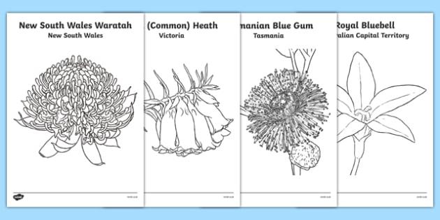 Australian States and Territories Floral Emblems Colouring Sheets - australia, floral emblems, flowers, Australian natives, states, territories, New South Wales, Victoria, Queensland, South Australia, Tasmania, Western Australia, Northern Territory,