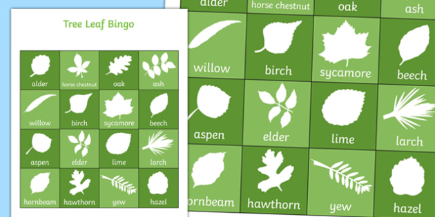 Tree Leaf Bingo - tree, tree leaf, leaf, bingo, activity, class, game