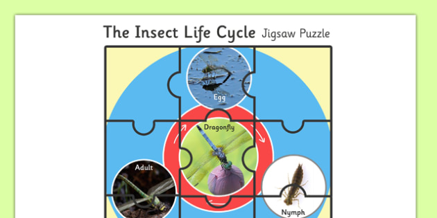 Life Cycle of Insect Jigsaw Puzzle - life cycle, insect, jigsaw puzzle, jigsaw, puzzle, activity, game