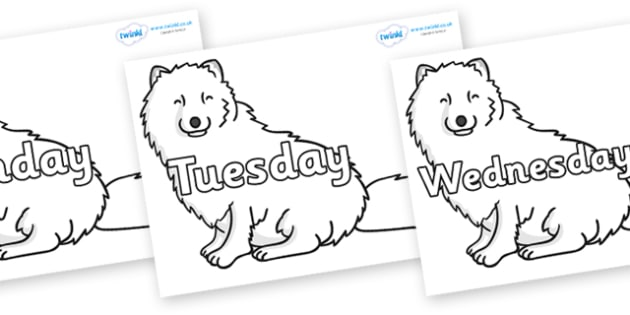 Days of the Week on Arctic Foxes - Days of the Week, Weeks poster, week, display, poster, frieze, Days, Day, Monday, Tuesday, Wednesday, Thursday, Friday, Saturday, Sunday