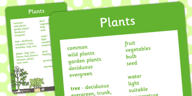 Year 2 Plants Scientific Vocabulary Poster - vocabulary, poster
