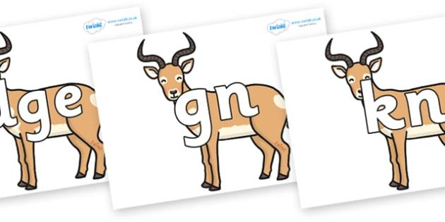 Silent Letters on Antelopes - Silent Letters, silent letter, letter blend, consonant, consonants, digraph, trigraph, A-Z letters, literacy, alphabet, letters, alternative sounds
