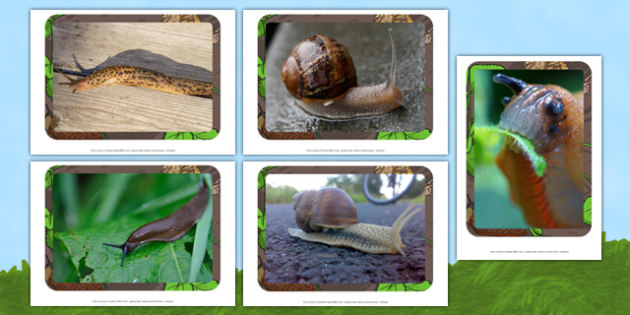 Slugs and Snails Photo Pack - EYFS, Understanding the world, minibeasts