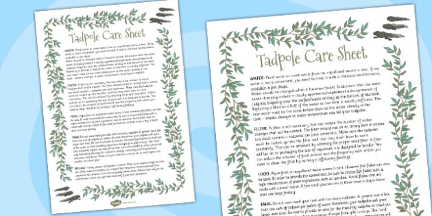 Tadpole Care Information Sheet - tadpole, care, sheet, frog, tank, caring