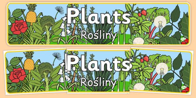 Plants Display Banner Polish Translation - polish, plants, plant, display banner, banner
