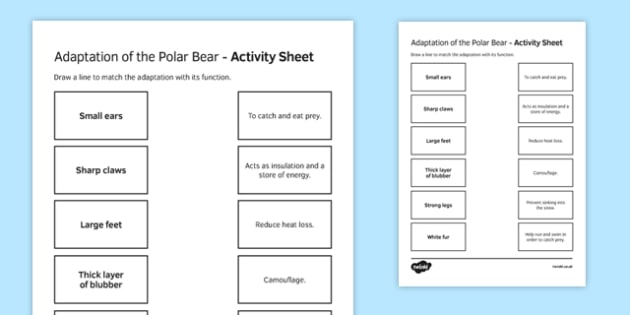 Adaptations in the Polar Bear Match and Draw