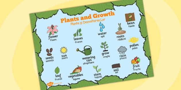 Plants and Growth Topic Word Mat Romanian Translation - romanian