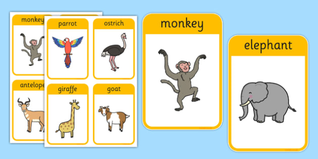 African Surprise Animal Flashcards - african surprise, animal, flash cards