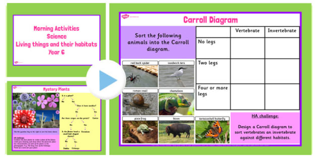 Year 6 Early Morning Science Activities Living Things - science