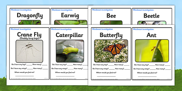 Minibeast Investigation Sheets - minibeast investigation, finding minibeasts, Minibeasts, Topic, Foundation stage, knowledge and understanding of the world, investigation, living things, snail, bee, ladybird, butterfly, spider