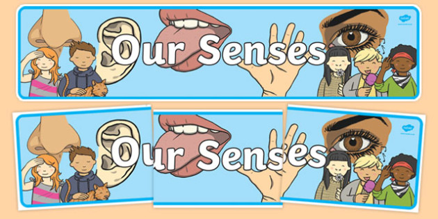 'Our Senses' Display Banner - Ourselves display,  KS1, display banner, ourselves, all about me, my body, senses, emotions, family, body, growth