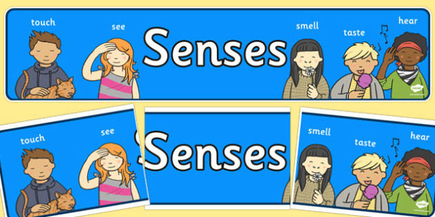 Five Senses Display Banner - Ourselves display, KS1, display banner, ourselves, all about me, my body, senses, emotions, family, body, growth