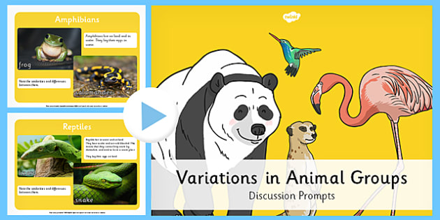 Animal Groups PowerPoint - grouping animals, animals, classifying animals, classifications of animal, amphibians, reptiles, mammals, types of animal