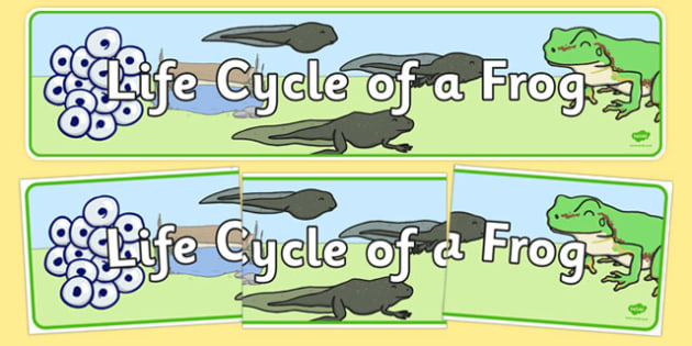 Life Cycle of a Frog Display Banner - Frog, life cycle, lifecycle, display, banner, poster, Frogspawn, Tadpole, Froglet, Frog, Minibeasts, Topic, Foundation stage, knowledge and understanding of the world, investigation, living thing