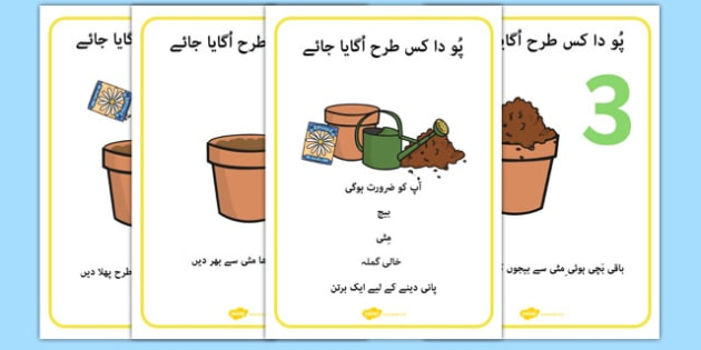 How to Grow a Plant Posters Urdu - urdu, Plant, Growth, Topic, Foundation stage, Flower, knowledge and understanding of the world, investigation, living things, labelling, labelling plant