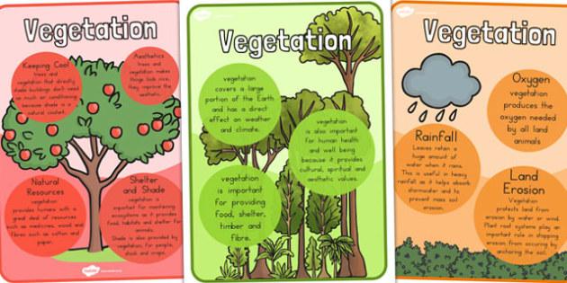 Vegetation Posters - Vegetation, Plants, Posters, Display, Flower