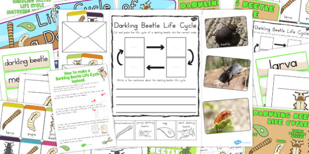 Darkling Beetle Life Cycle Lapbook Creation Pack - australia