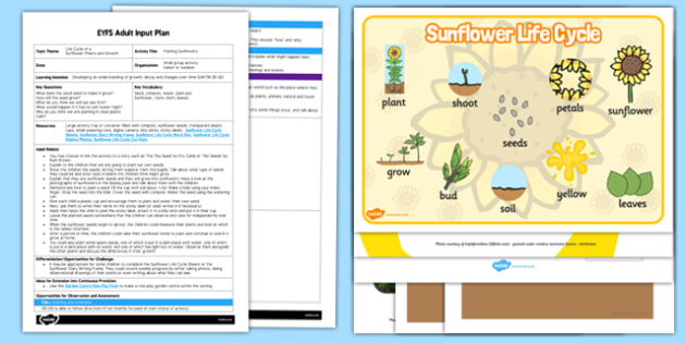 Planting Sunflowers EYFS Adult Input Plan and Resource Pack