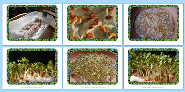 Cress Photo Pack - EYFS, KS1, Early Years, Key Stage 1, plants and growth, life cycle, seeds