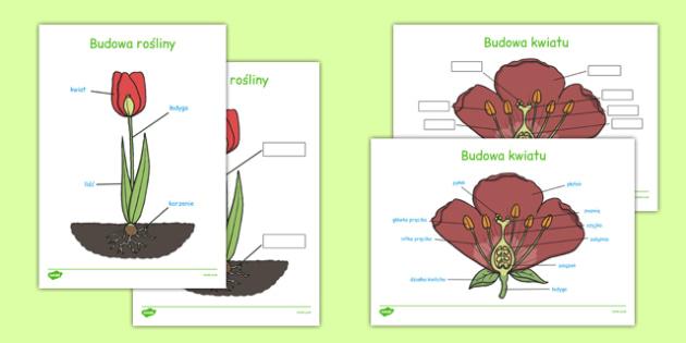 Budowa rośliny po polsku - przyroda, biologia, budowa