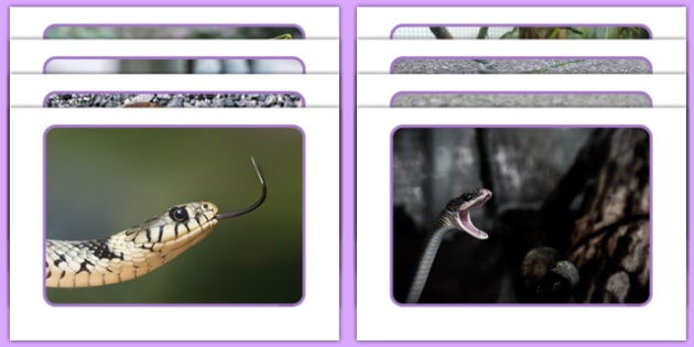 Snakes Display Photos - Slither, eyfs, jungle, movement, dance