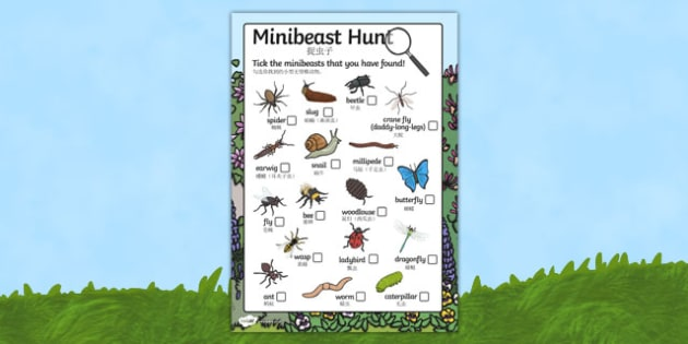 Minibeast Search Sheet Mandarin Chinese Translation - mandarin chinese, Minibeast hunt, minibeast investigation, finding minibeasts, Minibeasts, Topic, Foundation stage, knowledge and understanding of the world, investigation, living things, snail, b