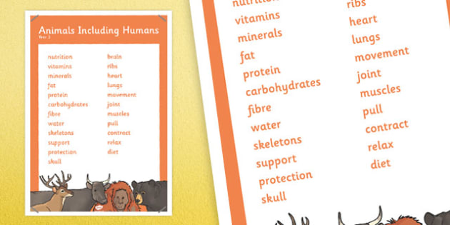 Year 3 Animals Including Humans Scientific Vocabulary Poster