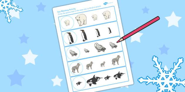 Polar Animals Size Matching Worksheet - Polar, Animals, Size, Ice