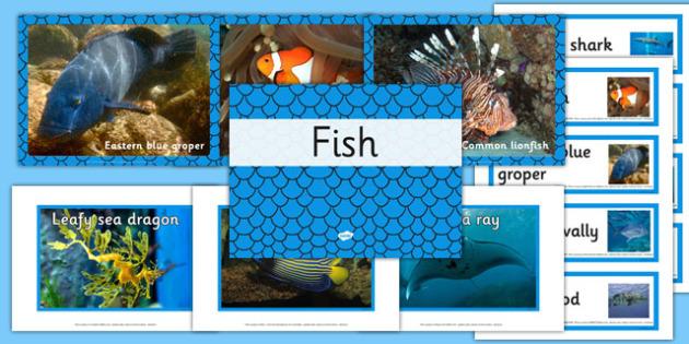 Australian Fish pack - australia, animals, fish, pack, australian
