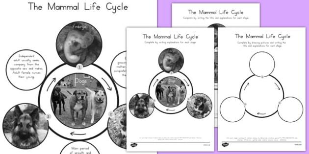Mammal Life Cycle - australia, mammal, life cycle, science, life, cycle