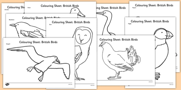 British Birds Colouring Sheets - british birds, colouring sheets, colour, colouring, birds, animals