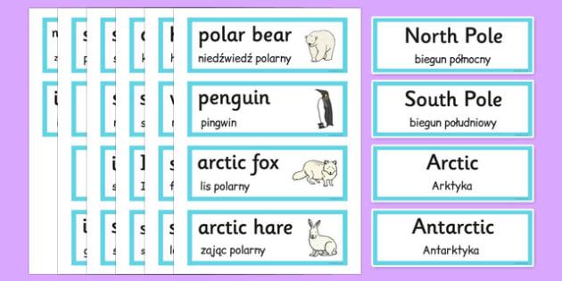 Polar Regions Word Cards Polish Translation - polish, polar regions, word cards, word, cards, polar, regions